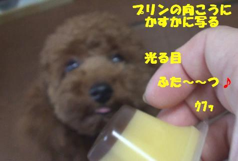 DSC01583.jpg
