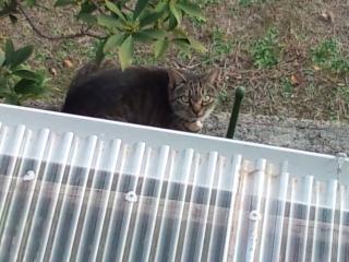 DSC_0217_トラ猫ちゃん