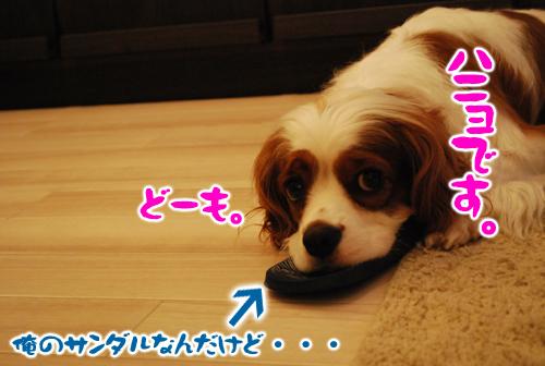 DSC_4035.jpg