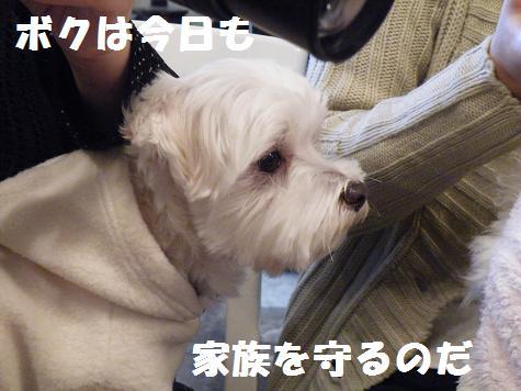 2008_12090083.jpg