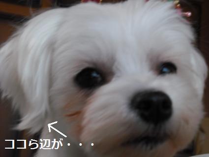 2009_0109コンデジ0061