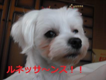 2009_0109コンデジ0062