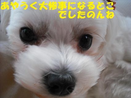 2009_0109コンデジ0066