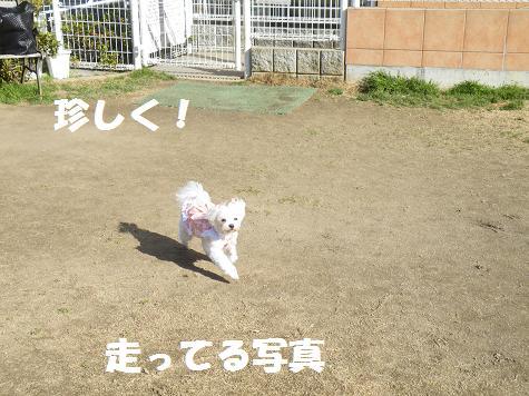 2009_01150018.jpg
