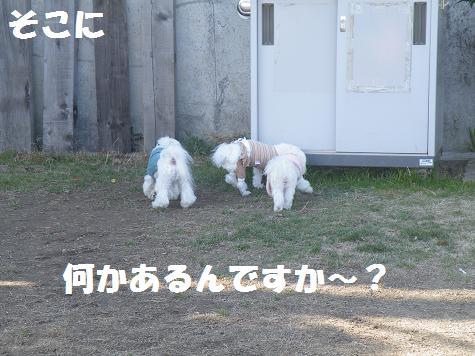 2009_01150026.jpg
