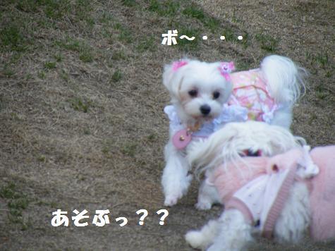 2009_01150037.jpg