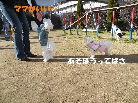 2009_01150082.jpg