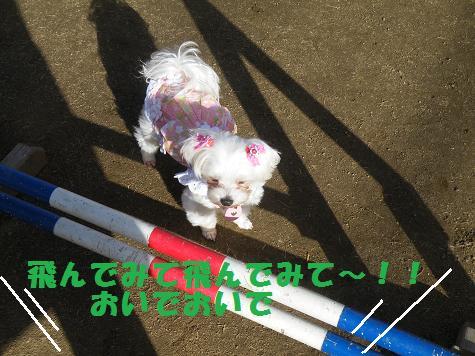 2009_01150084.jpg