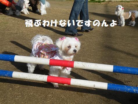 2009_01150085.jpg