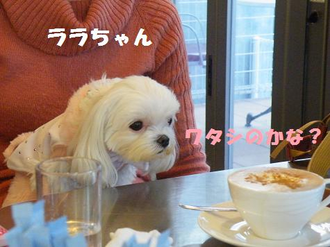 2009_01150089.jpg