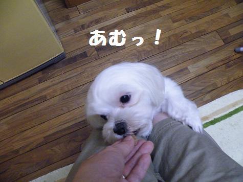 2009_06160016.jpg