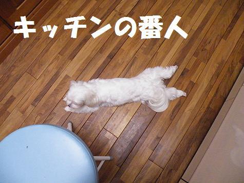 2009_07030003.jpg