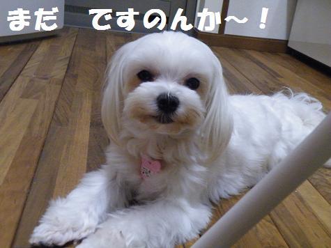 2009_0703000601.jpg