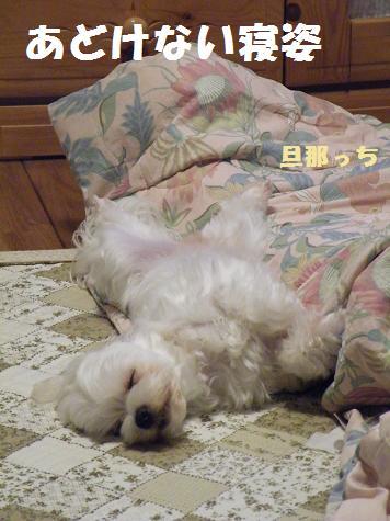 2009_07030026.jpg