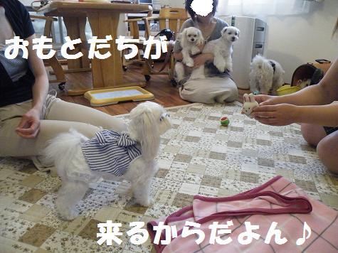 2009_07220048.jpg