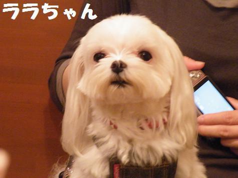 2009_100901.jpg