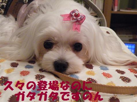 2009_101502.jpg
