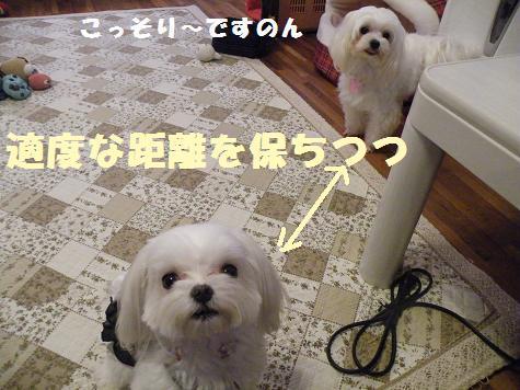 2009_101509.jpg