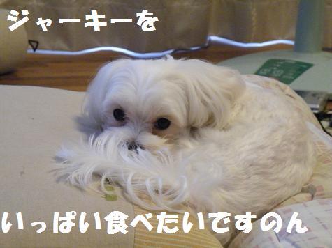 2009_101701.jpg