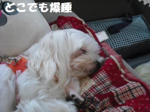 2009_101801.jpg