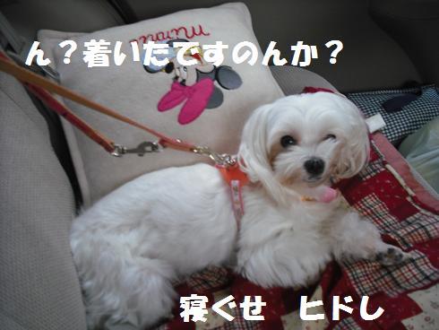 2009_101802.jpg