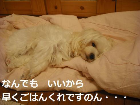 2009_102703.jpg