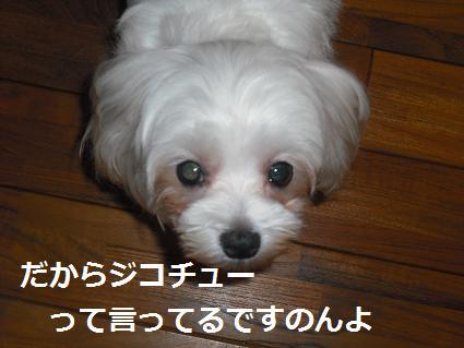 2009_111206.jpg