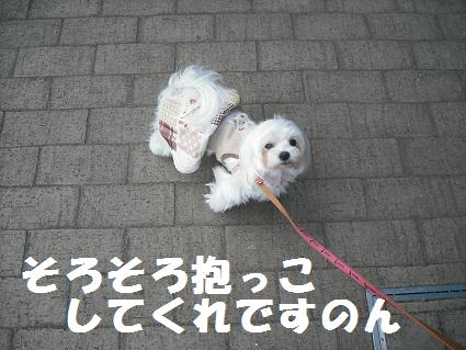 2009_112106.jpg