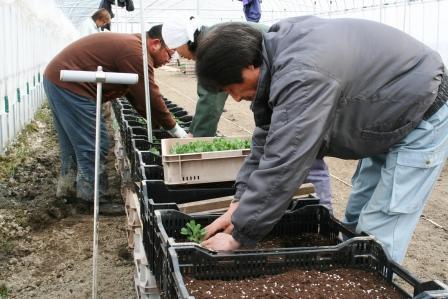 20110325農園作業風景 (9)