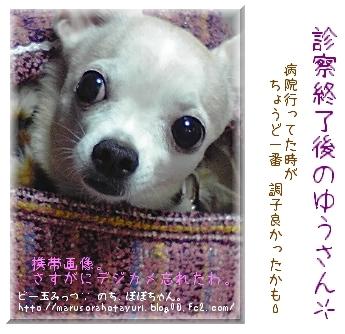診察後のゆうさん(2009.1.9 PM18)