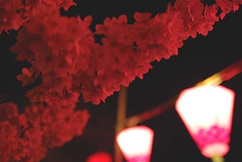 いたち川べりにて夜桜