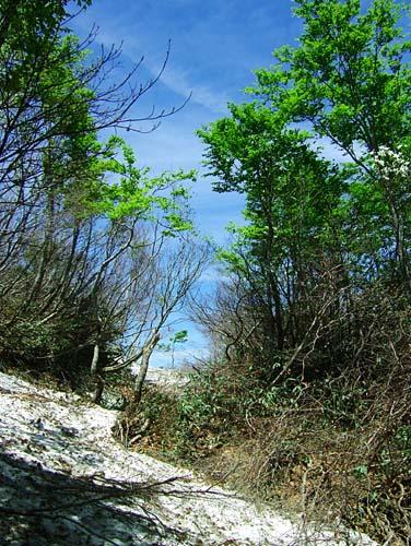 鋲ガ岳と烏帽子山 残雪の登山道