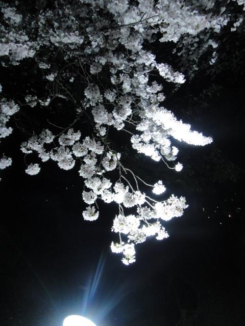 ライティング桜