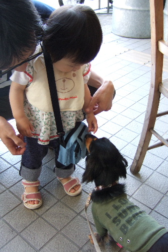 yumechinyashichi.jpg