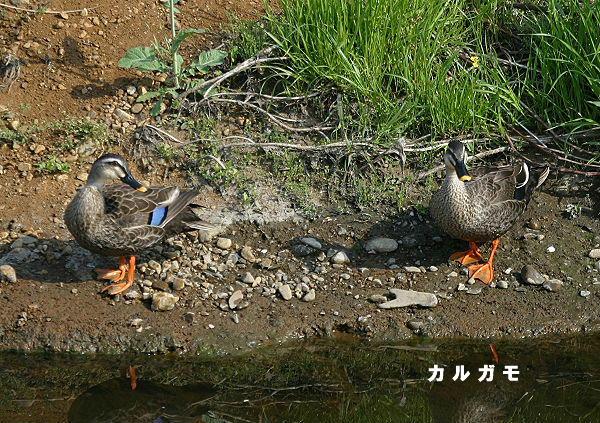 2005.04.19-karugamo-2005.04.19-1.jpg