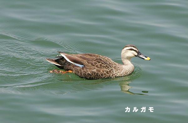 2005.04.24-karugamo-2005.04.24-1.jpg