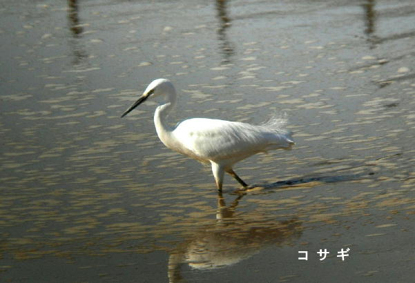 20051212130202.jpg