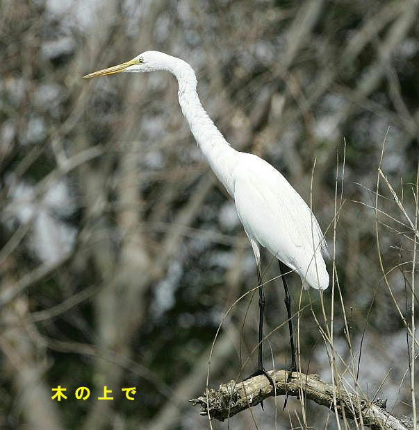 fc2-4-daisagi-2005.03.18-05.jpg