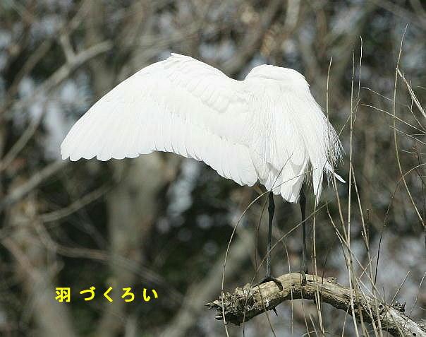 fc2-6-daisagi-2005.03.18-10.jpg