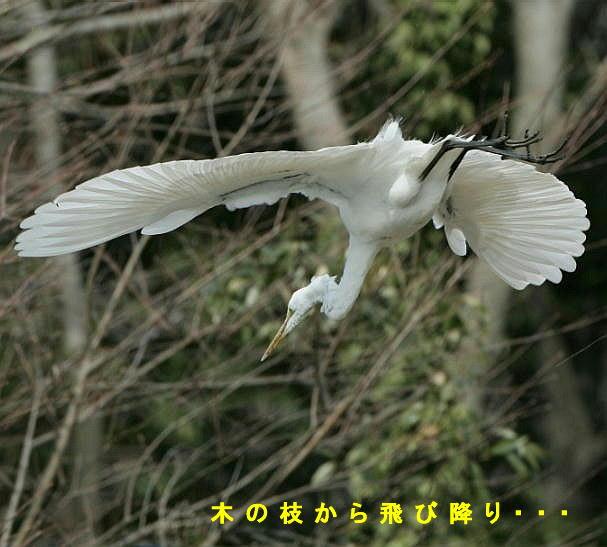 fc2-7-daisagi-2005.03.18-16.jpg