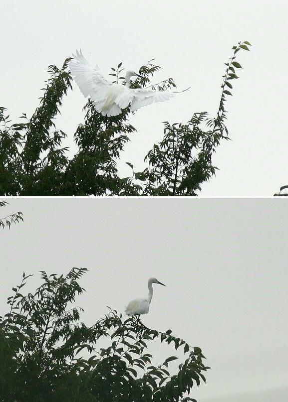 kosagi-2005.08.27.jpg