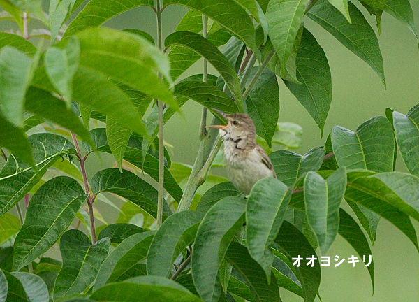 ooyosikiri-2005.06.26-6.jpg