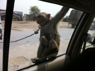 delhi_car03.jpg