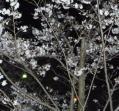 夜桜(丸亀城)
