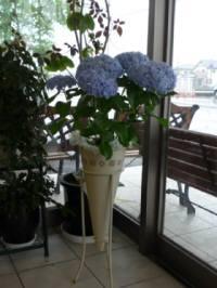 お祝い・紫陽花・アステラス製薬
