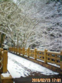琴南・雪景色