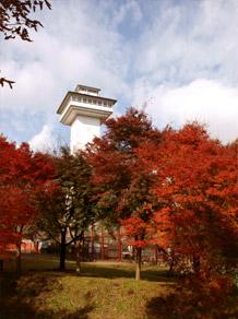 お丸山紅葉2008-3