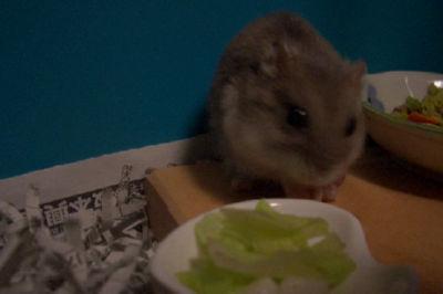 お野菜、うまし!