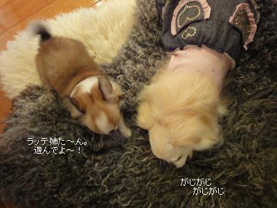 ラッテとビーノ2月 (105)