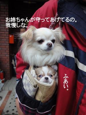 ラッテとビーノ2月 (9)
